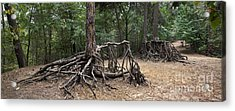 120223p257 Acrylic Print by Arterra Picture Library