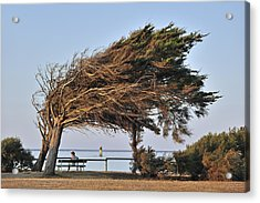 Acrylic Print featuring the photograph 120920p152 by Arterra Picture Library