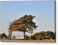 Acrylic Print featuring the photograph 120920p153 by Arterra Picture Library