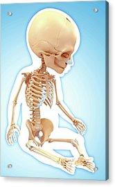 Baby's Skeletal System Acrylic Print by Pixologicstudio