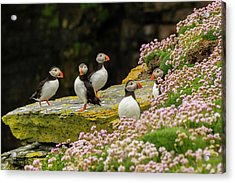 Europe, Scotland, Shetland Islands Acrylic Print by Jaynes Gallery