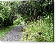 Forest Trail Acrylic Print by Les Cunliffe