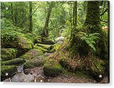 Landscape Of Becky Falls Waterfall In Dartmoor National Park Eng Acrylic Print by Matthew Gibson