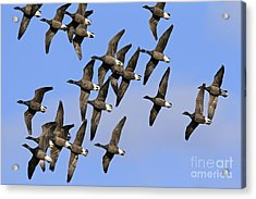 Acrylic Print featuring the photograph 130109p166 by Arterra Picture Library