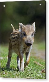 130109p243 Acrylic Print by Arterra Picture Library