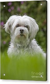 130918p024 Acrylic Print by Arterra Picture Library