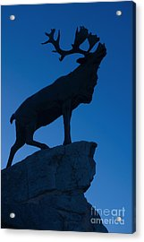 130918p144 Acrylic Print by Arterra Picture Library
