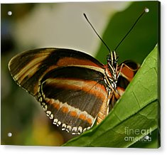Acrylic Print featuring the photograph Butterfly by Olga Hamilton