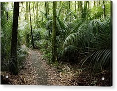 Tropical Forest Acrylic Print by Les Cunliffe