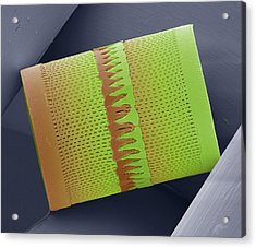 Diatom Acrylic Print by Steve Gschmeissner
