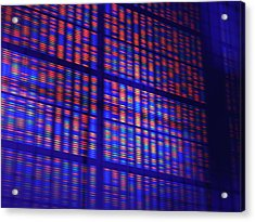 Dna Microarray Acrylic Print