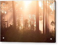 Foggy Sunrise At Long Pine Key Acrylic Print by Jonathan Gewirtz