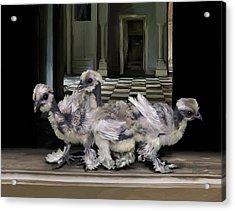 15. Lizard Chicks Acrylic Print