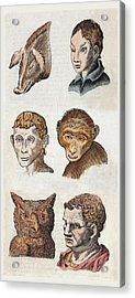 1590 Della Porta Animal Human Physiognomy Acrylic Print