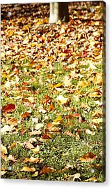 Autumn Acrylic Print by Les Cunliffe