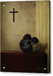 16. Black Silkie Acrylic Print