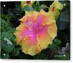 Flower Acrylic Print by Ted Pollard