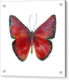 16 Mesene Rubella Butterfly Acrylic Print