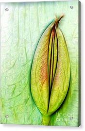 Tulip Acrylic Print by Odon Czintos