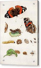 1683 Maria Sybella Merian Metamorphosis Acrylic Print by Paul D Stewart