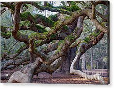 Angel Oak Tree Unique View Acrylic Print