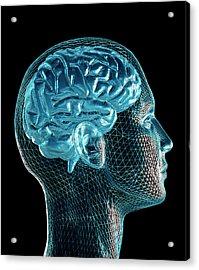 Brain Acrylic Print by Pasieka