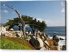 Acrylic Print featuring the photograph 17 Mile Drive  by Vinnie Oakes