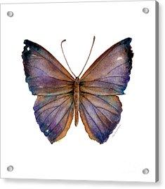 18 Purple Pandemos Acrylic Print by Amy Kirkpatrick