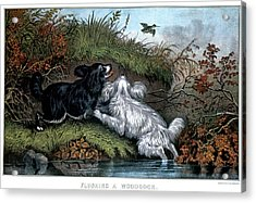1860s Two Spaniel Dogs Flushing Acrylic Print