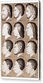 1870 Haeckel Racist Human Illustration Acrylic Print by Paul D Stewart