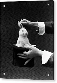 1930s Magician Hands Pulling Rabbit Acrylic Print