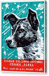 1957 Laika The Space Dog Acrylic Print
