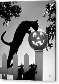 1970s Black Cat And Jack-o-lantern Acrylic Print