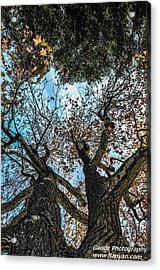 1st Tree Acrylic Print by Gandz Photography