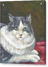 A Cat Of Peter Paul Rubens Style Acrylic Print