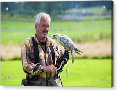 A Falconry Display Acrylic Print by Ashley Cooper