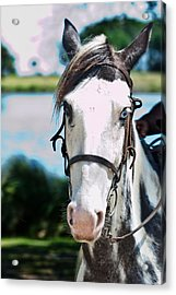 A Horse Is A Horse Of Course Acrylic Print by Frank Feliciano