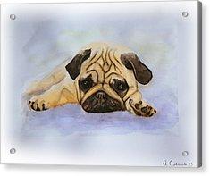 A Little Bulldog Acrylic Print by Anna Androsovski