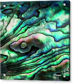 Abalone Shell Acrylic Print by Science Photo Library