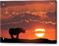 Africa, Kenya, Masai Mara Game Reserve Acrylic Print by Jaynes Gallery