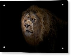 Acrylic Print featuring the photograph African Lion by Peter Lakomy