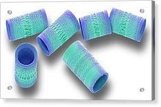 Aitalica Diatoms Acrylic Print
