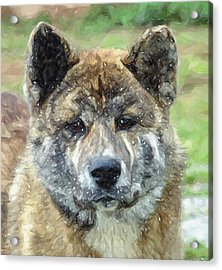Akita Dog Portrait Acrylic Print by Olde Time  Mercantile