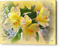 Alstroemeria Acrylic Print by Bishopston Fine Art
