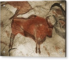 Altamira Cave Paintings Acrylic Print by Photo Researchers