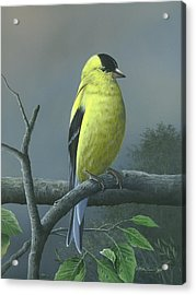 Acrylic Print featuring the painting American Goldfinch by Mike Brown