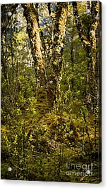 Ancient Woods Acrylic Print by Tim Hester