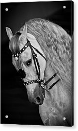Acrylic Print featuring the photograph Andalusian D9098 by Wes and Dotty Weber