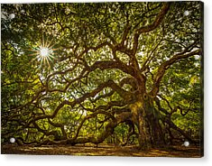Angel Oak Acrylic Print