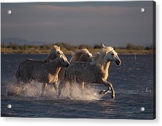 Angels Of Camargue Acrylic Print